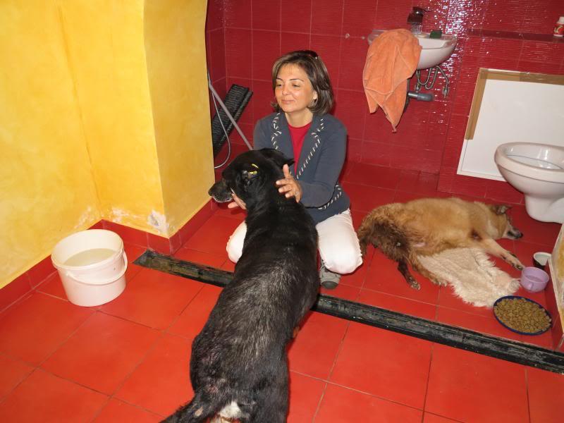 Fetitza, vieille chienne paralysée des membres inférieurs IMG_0132