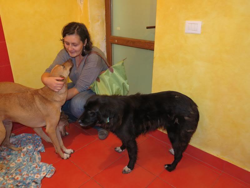 Fetitza, vieille chienne paralysée des membres inférieurs IMG_0134