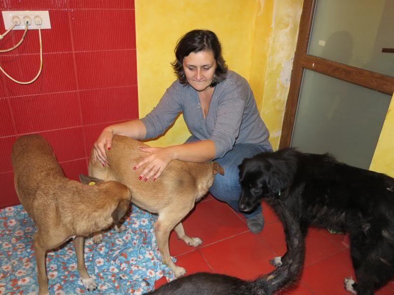 Fetitza, vieille chienne paralysée des membres inférieurs IMG_0136