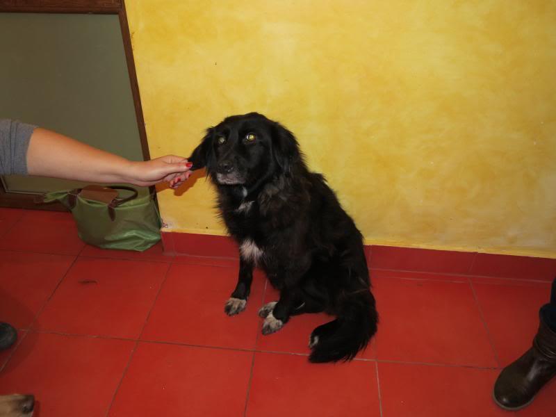 Fetitza, vieille chienne paralysée des membres inférieurs IMG_0141