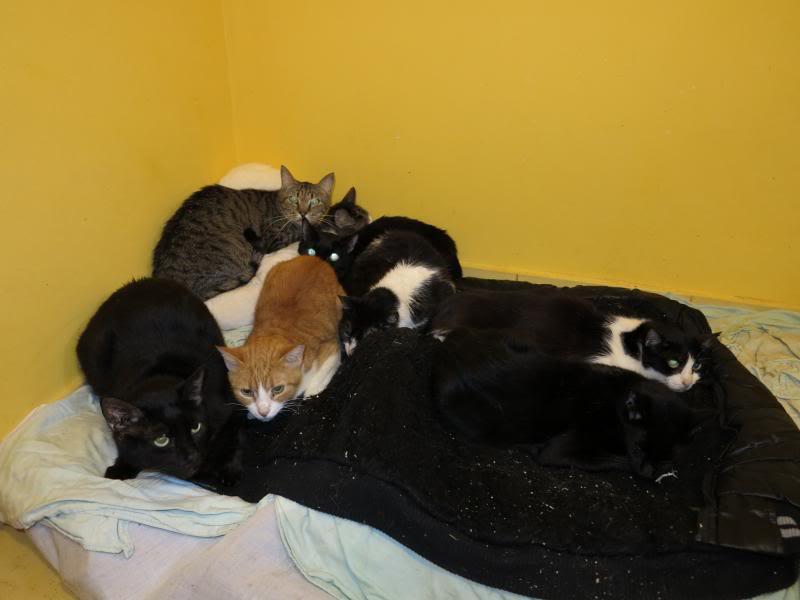 Sauvetage des chiens et chats d'Avédis IMG_0146