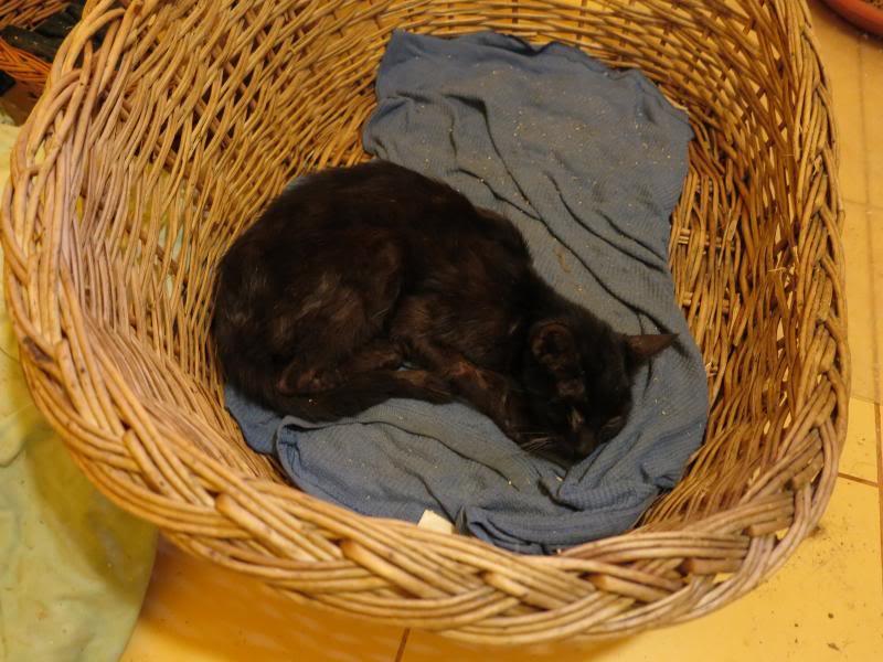 Sauvetage des chiens et chats d'Avédis IMG_0147