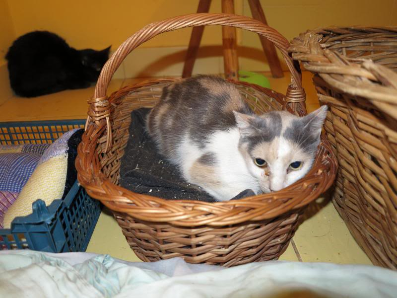 Sauvetage des chiens et chats d'Avédis IMG_0148