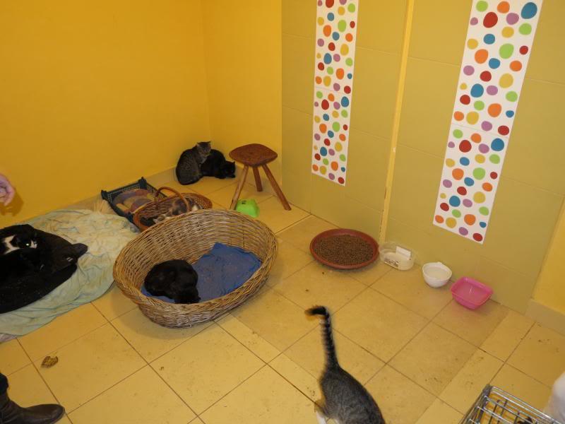 Sauvetage des chiens et chats d'Avédis IMG_0154