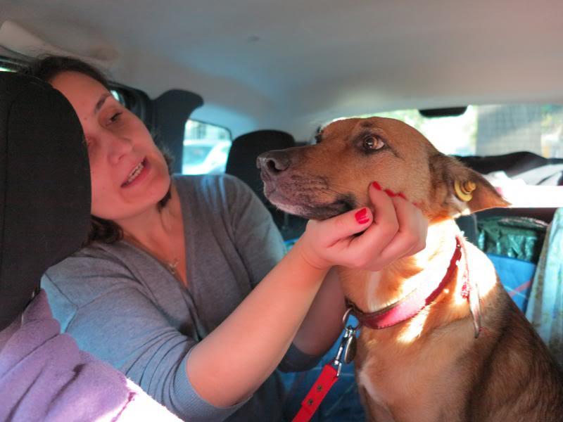 Sauvetage des chiens et chats d'Avédis IMG_0266