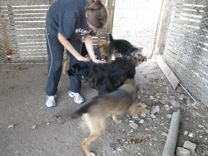 Sauvetage des chiens et chats d'Avédis IMG_0278
