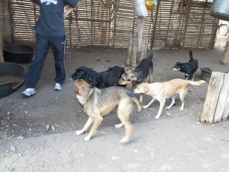 Sauvetage des chiens et chats d'Avédis IMG_0282