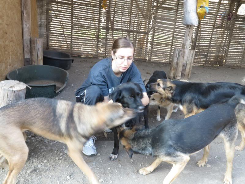 Sauvetage des chiens et chats d'Avédis IMG_0285