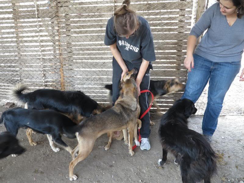 Sauvetage des chiens et chats d'Avédis IMG_0288