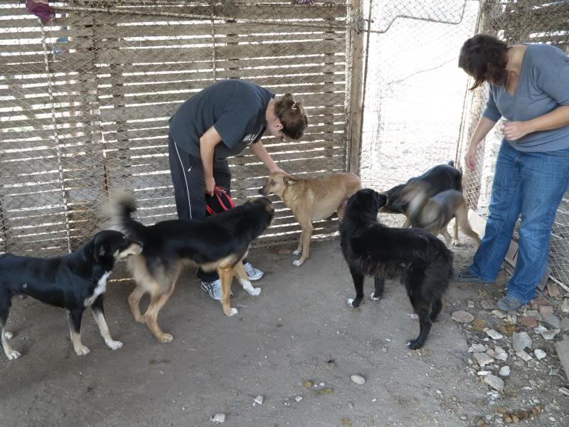 Sauvetage des chiens et chats d'Avédis IMG_0291