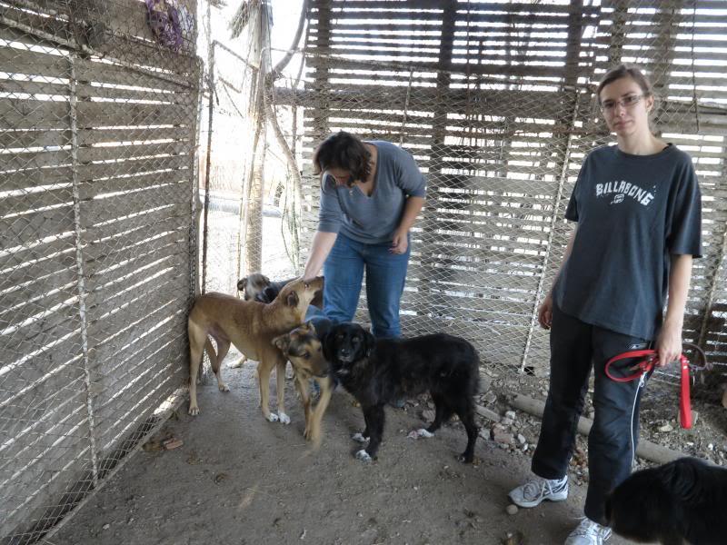 Sauvetage des chiens et chats d'Avédis IMG_0298
