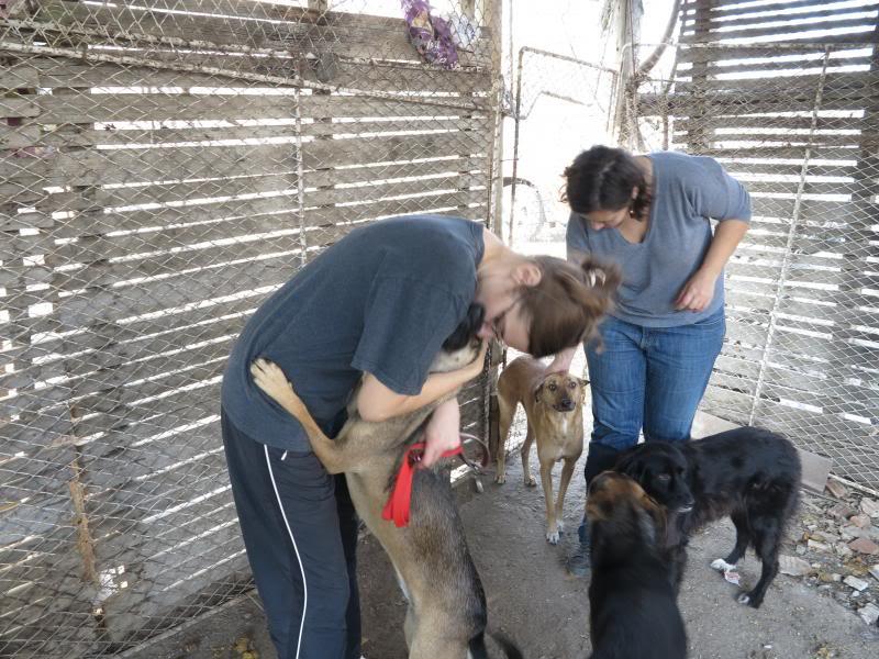 Sauvetage des chiens et chats d'Avédis IMG_0300
