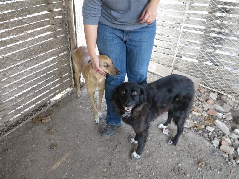 Sauvetage des chiens et chats d'Avédis IMG_0301