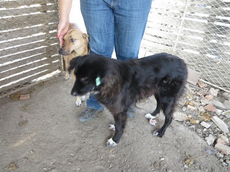 Sauvetage des chiens et chats d'Avédis IMG_0302