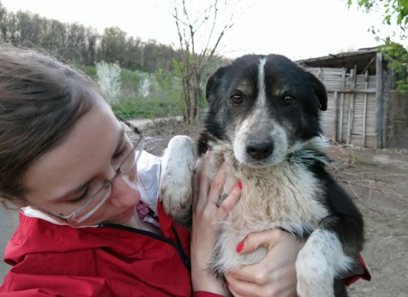 Rudolf, petit croisé border, né en 2011 IMG_55002