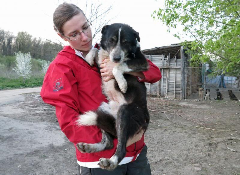 Rudolf, petit croisé border, né en 2011 IMG_55032