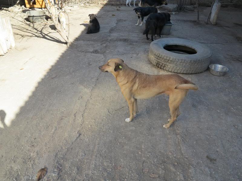 Tzupy, chien de notre quartier, mâle très sociable, né en 2009. IMG_0426