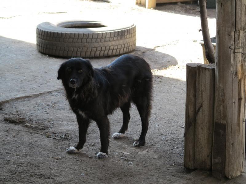 Benny, née en 2003, très sociable et calme - Adoptée IMG_0571