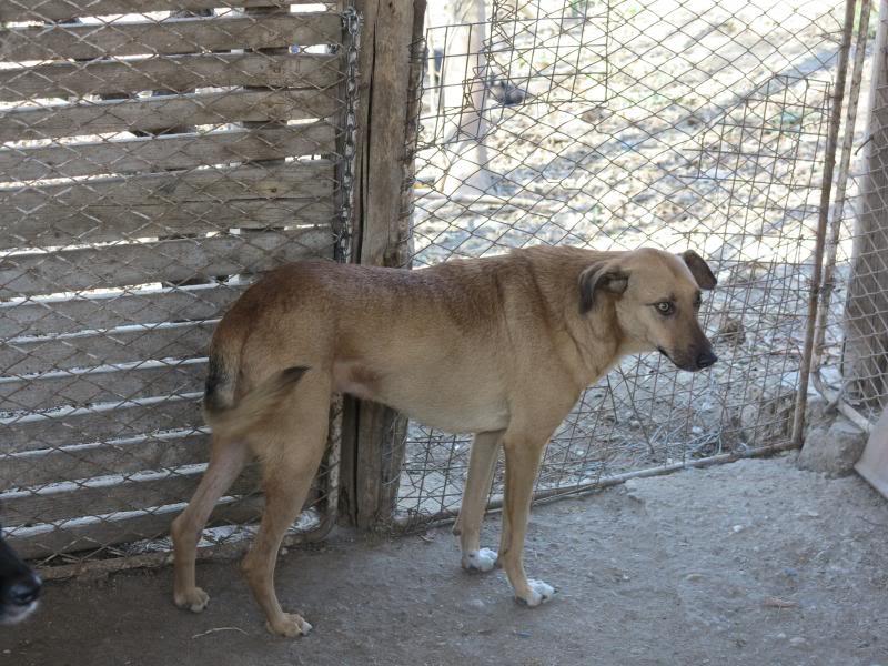 Tzupy, chien de notre quartier, mâle très sociable, né en 2009. IMG_0589