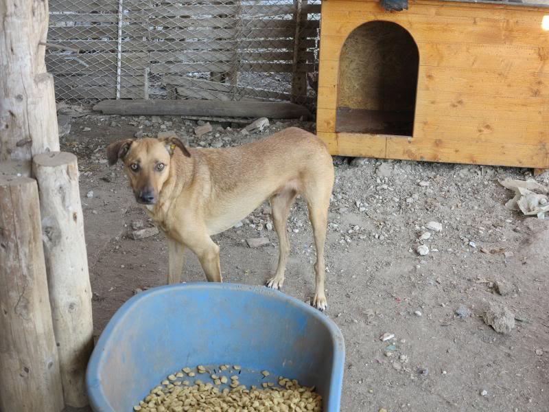 Tzupy, chien de notre quartier, mâle très sociable, né en 2009. IMG_0623