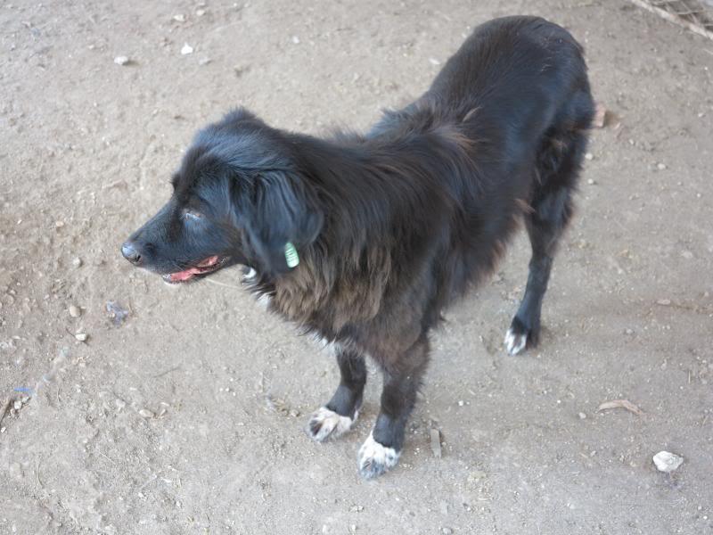 Benny, née en 2003, très sociable et calme - Adoptée IMG_0625