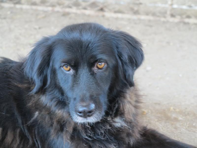 Benny, née en 2003, très sociable et calme - Adoptée IMG_0633