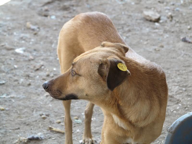 Tzupy, chien de notre quartier, mâle très sociable, né en 2009. IMG_0637