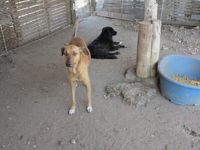 Tzupy, chien de notre quartier, mâle très sociable, né en 2009. IMG_0644