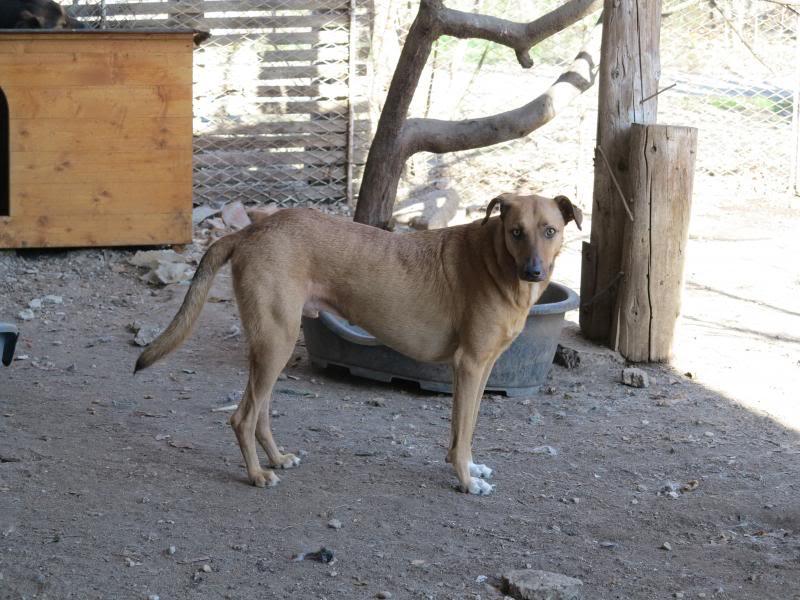 Tzupy, chien de notre quartier, mâle très sociable, né en 2009. IMG_0645