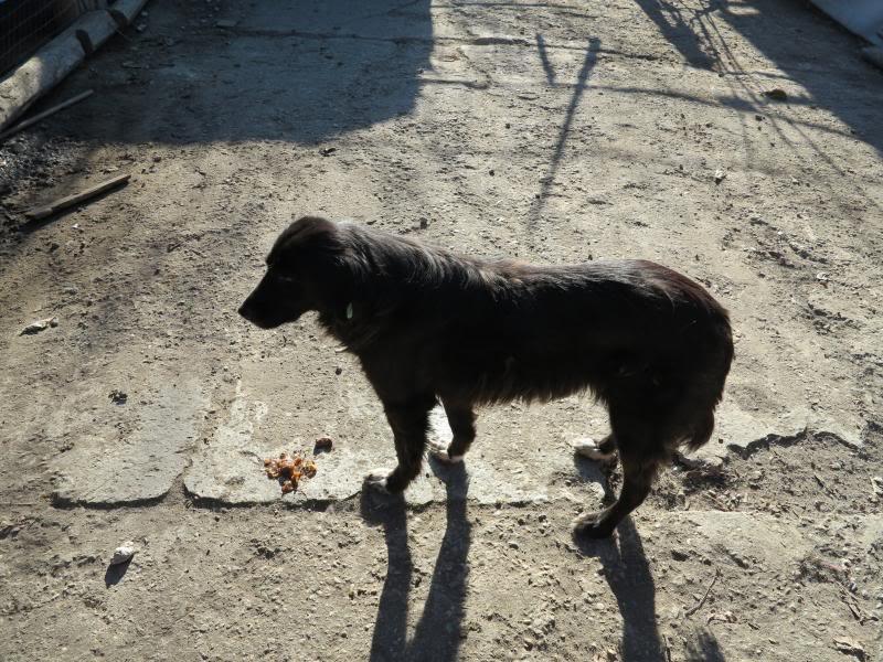 Benny, née en 2003, très sociable et calme - Adoptée IMG_0741
