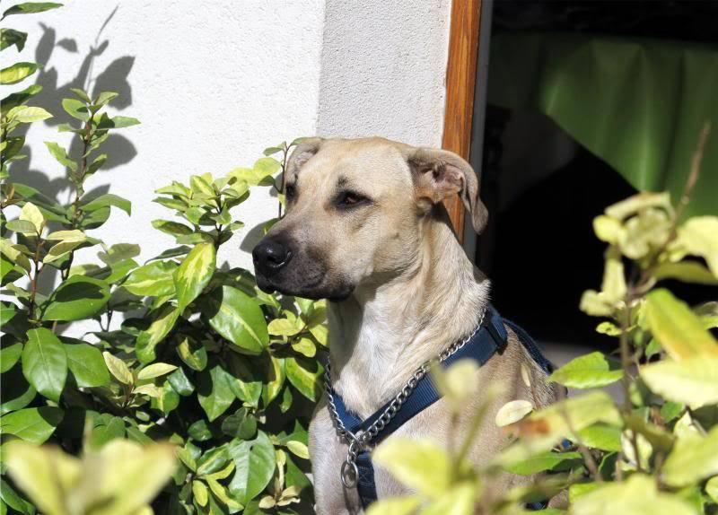 Lila, adorable chienne croisée, née en octobre 2011 IMG_9750-1