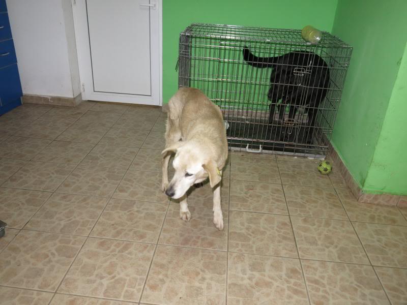 Cali, vielle chienne du quartier d'Irina, Monica et Avedis - décédée IMG_1152