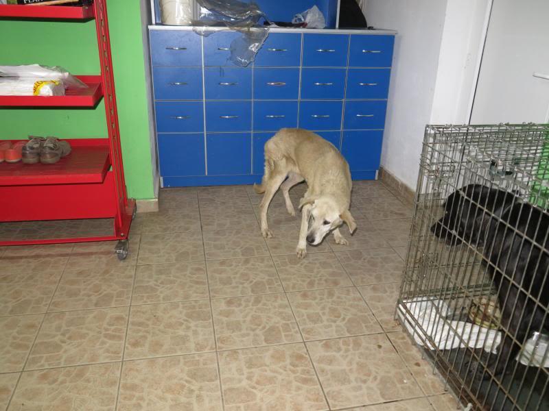 Cali, vielle chienne du quartier d'Irina, Monica et Avedis - décédée IMG_1155