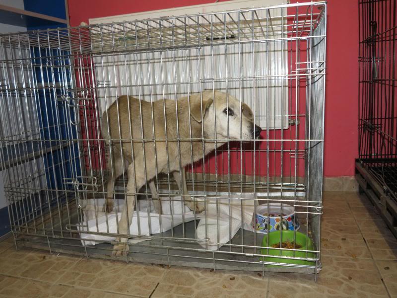 Cali, vielle chienne du quartier d'Irina, Monica et Avedis - décédée IMG_1157