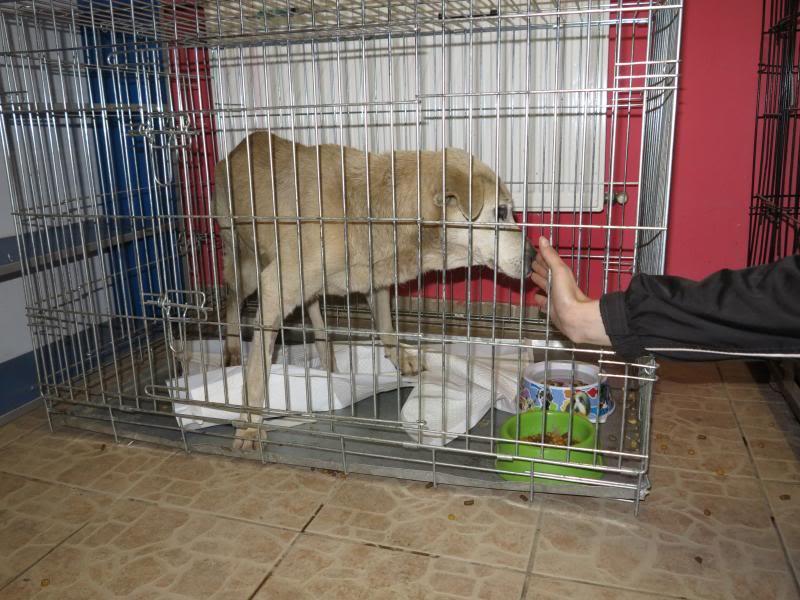 Cali, vielle chienne du quartier d'Irina, Monica et Avedis - décédée IMG_1159