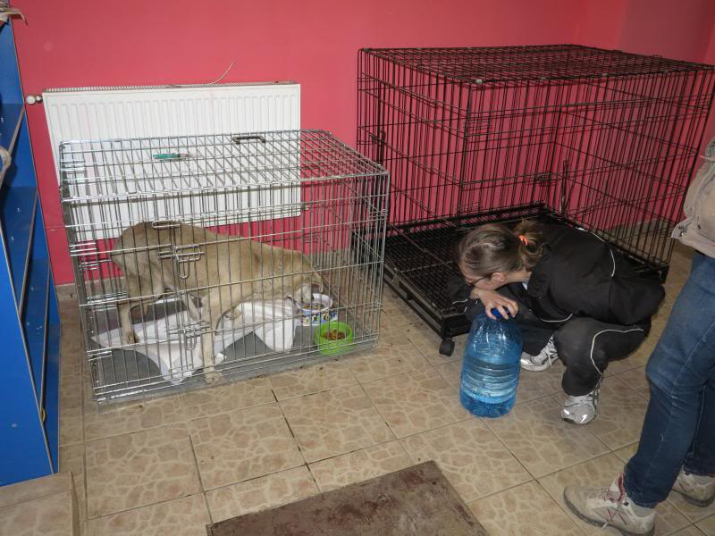 Cali, vielle chienne du quartier d'Irina, Monica et Avedis - décédée IMG_1160