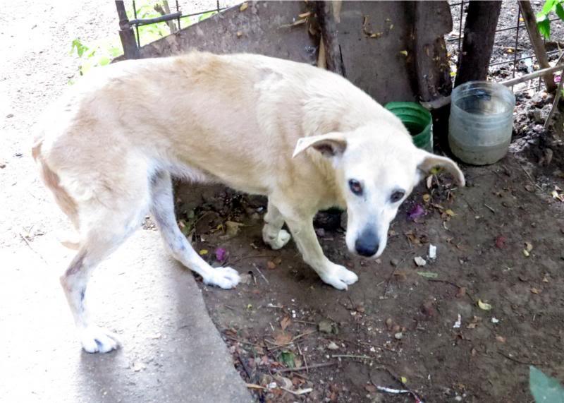 Cali, vielle chienne du quartier d'Irina, Monica et Avedis - décédée IMG_93902