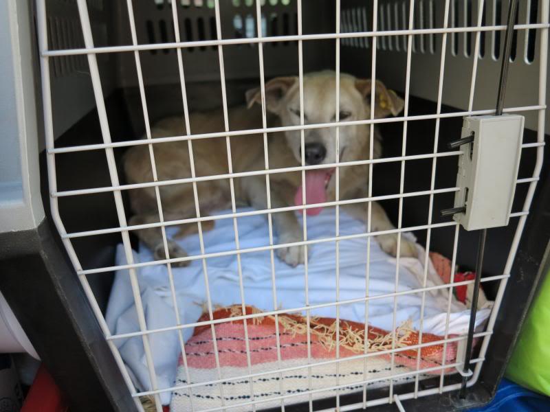 Cali, vielle chienne du quartier d'Irina, Monica et Avedis - décédée IMG_9392
