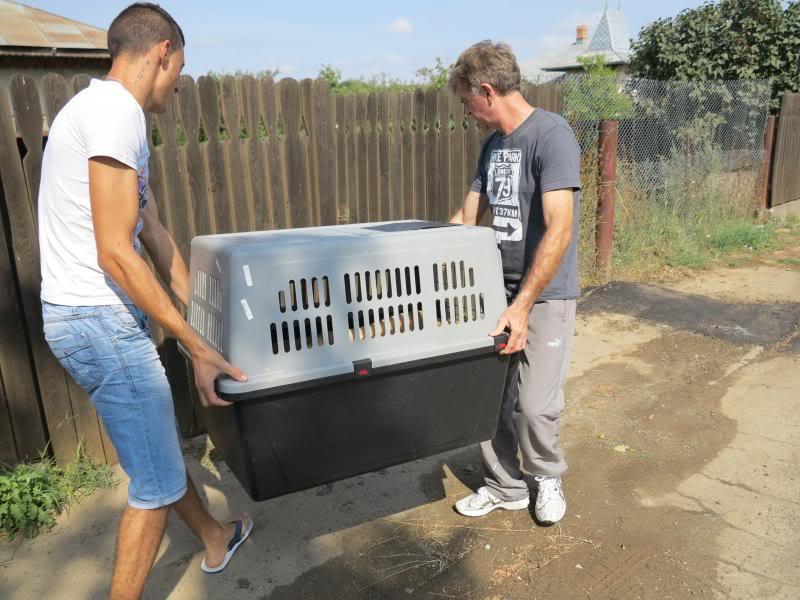 Cali, vielle chienne du quartier d'Irina, Monica et Avedis - décédée IMG_9398