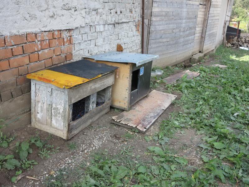 Cali, vielle chienne du quartier d'Irina, Monica et Avedis - décédée IMG_9410