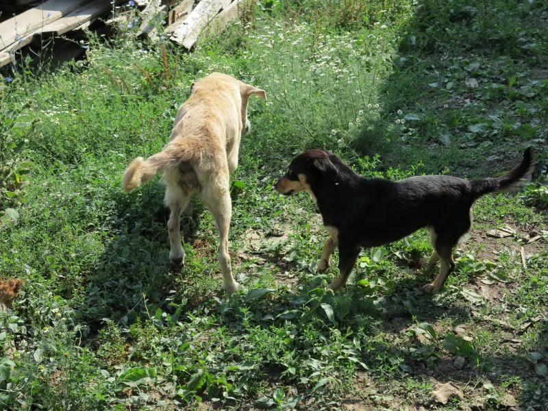 Cali, vielle chienne du quartier d'Irina, Monica et Avedis - décédée IMG_9413