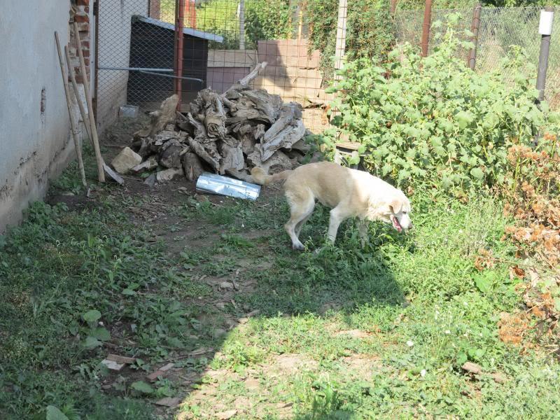 Cali, vielle chienne du quartier d'Irina, Monica et Avedis - décédée IMG_9414
