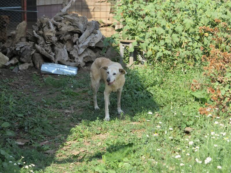 Cali, vielle chienne du quartier d'Irina, Monica et Avedis - décédée IMG_9419