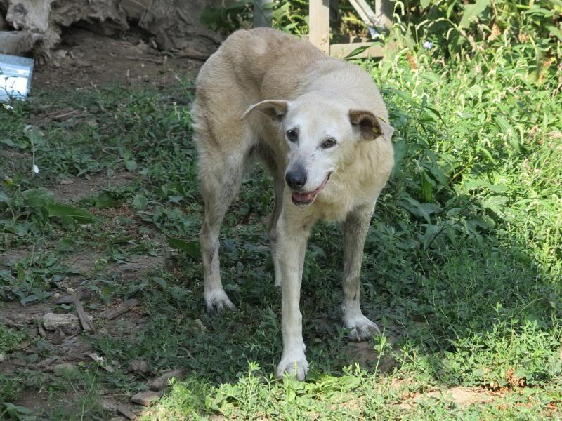 Cali, vielle chienne du quartier d'Irina, Monica et Avedis - décédée IMG_9420