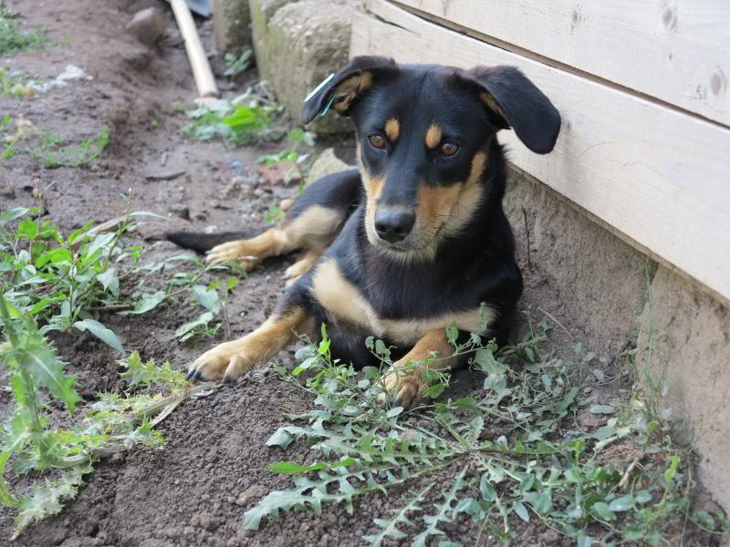 Cali, vielle chienne du quartier d'Irina, Monica et Avedis - décédée IMG_9425