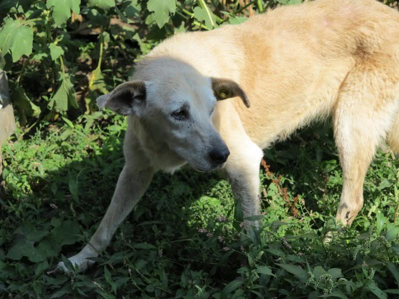 Cali, vielle chienne du quartier d'Irina, Monica et Avedis - décédée IMG_9427