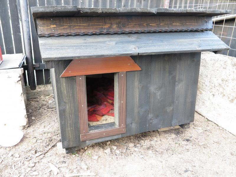 Cali, vielle chienne du quartier d'Irina, Monica et Avedis - décédée IMG_0781