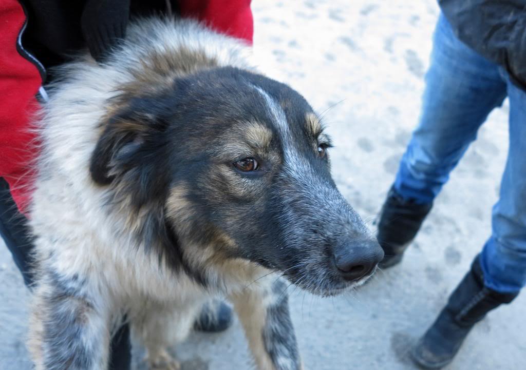 Spot, né en avril 2012, abandonné à l'âge de 3 semaines IMG_37592_zps22af771b
