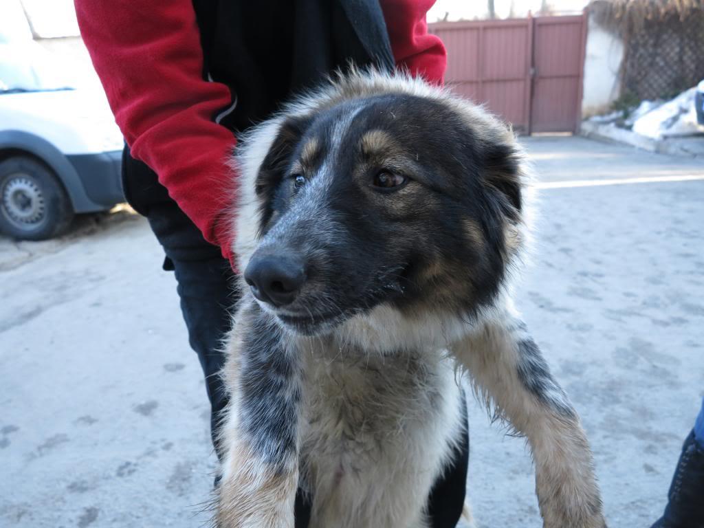 Spot, né en avril 2012, abandonné à l'âge de 3 semaines IMG_3764_zpsdd450e3d