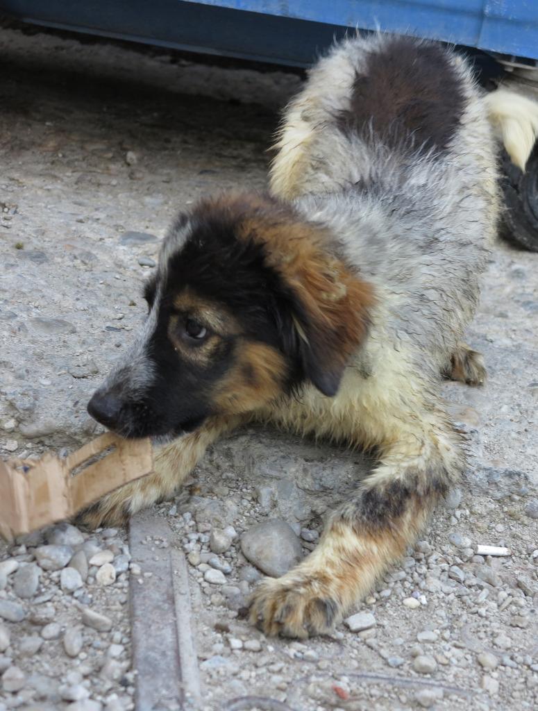 Spot, né en avril 2012, abandonné à l'âge de 3 semaines IMG_08592